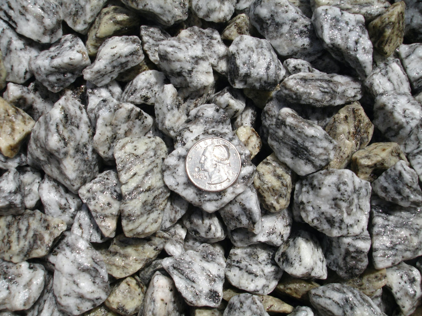 Zebra stone wet